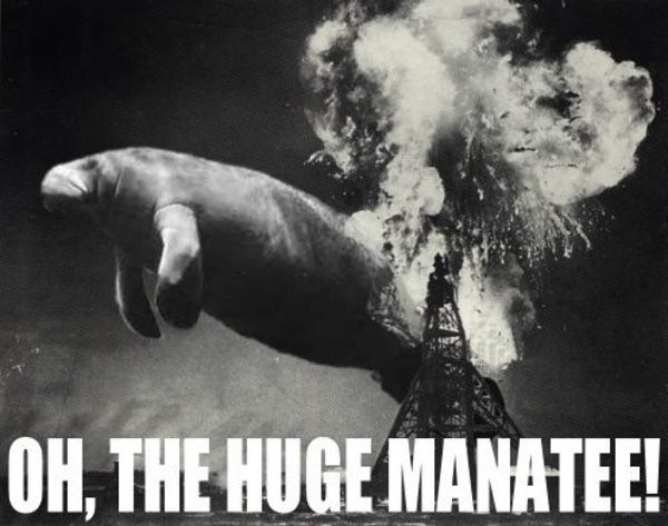 Oh the huge manatee!